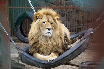В Харьковском зоопарке выставят посты