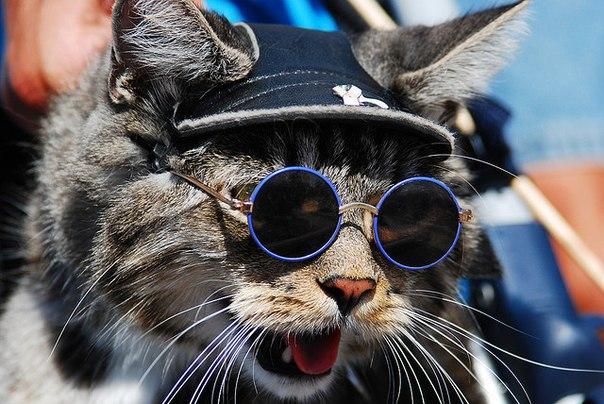 картинки кот рокер