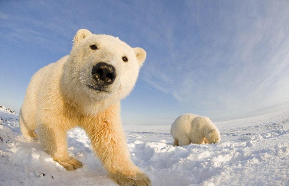 Харьковчанин в Антарктиде рисковал жизнью (ВИДЕО)