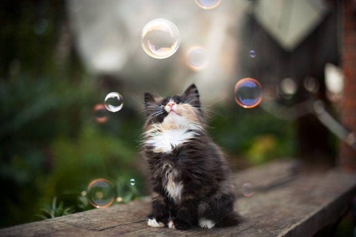 Жителей Харькова накроют мыльным пузырем