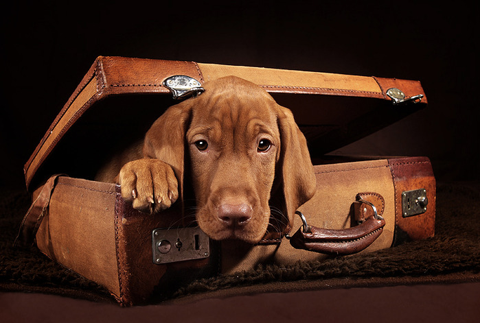 Производители чемоданов оказались в лидерах