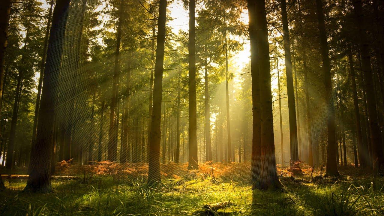 Леса становятся смертельно опасными