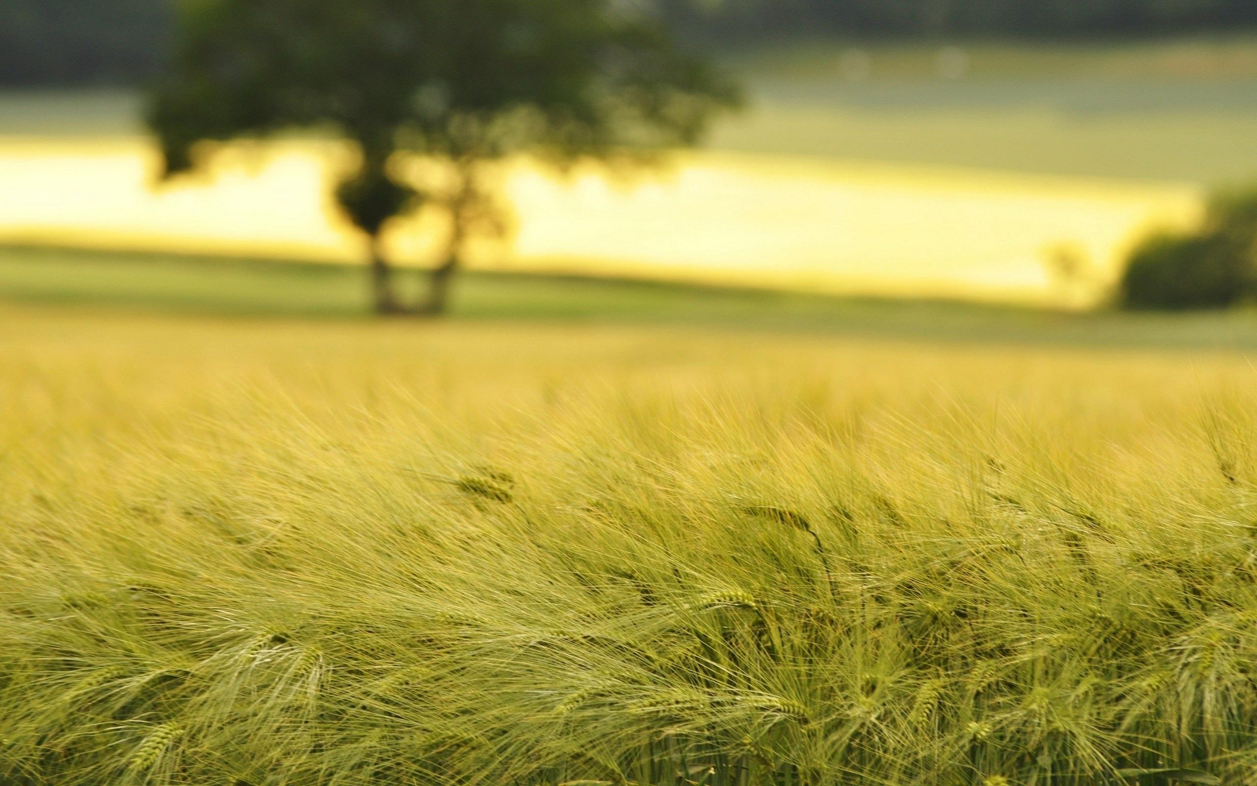 У харьковских фермеров отобрали землю