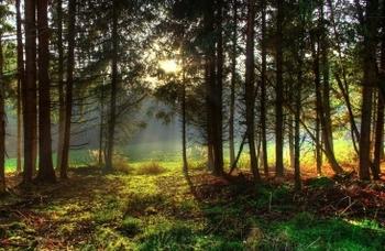 Любители леса остались не у дел