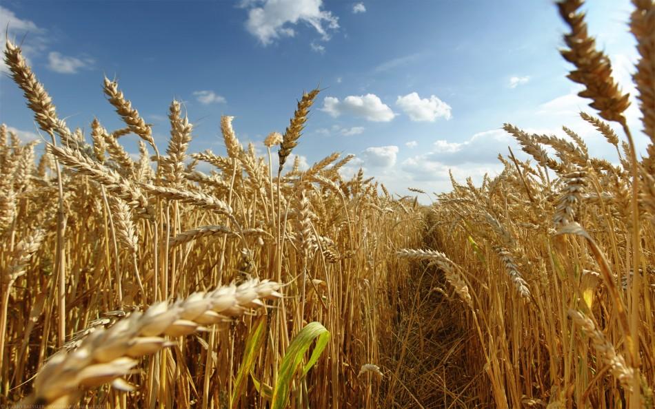 На Харьковщине уничтожили тонны хлеба (ФОТО)