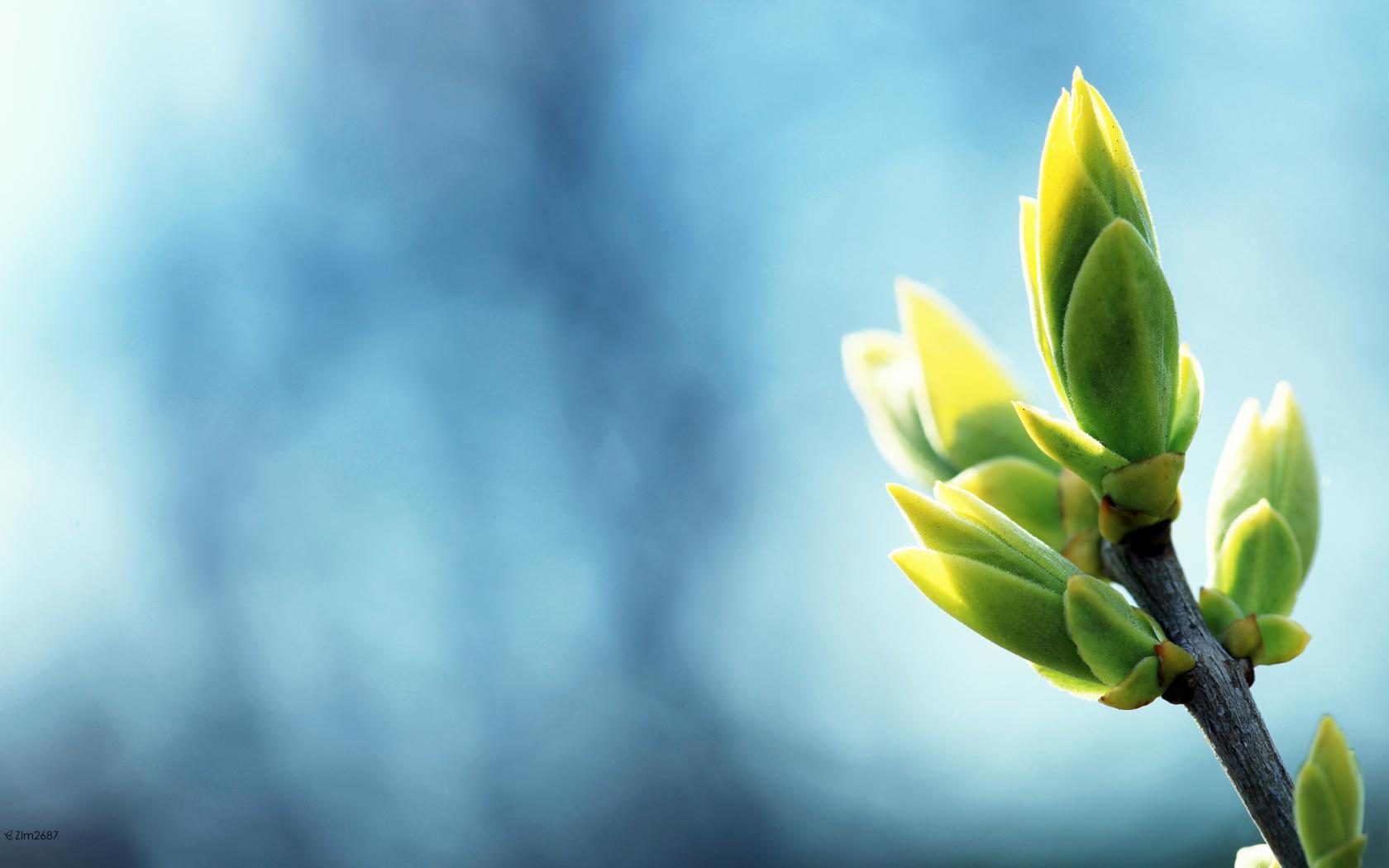 Весна вернулась в Харьков (ФОТО)