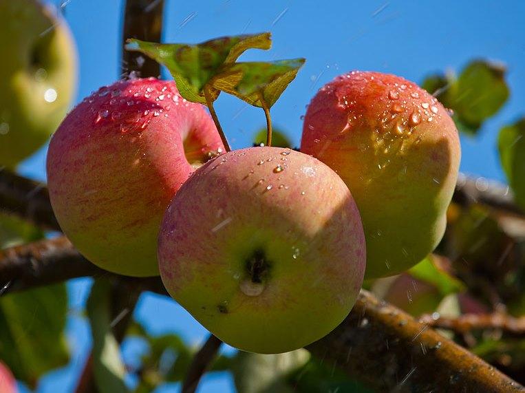 Харьковчан подсадят на запретный плод