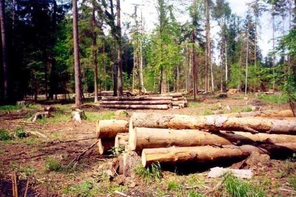Скоробагач: Мы требуем ужесточить наказание за незаконную вырубку леса