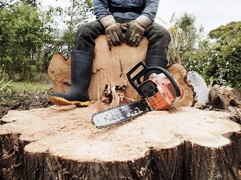 Леса массово уничтожают на Харьковщине