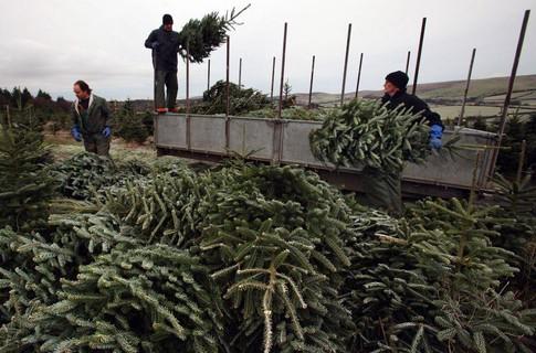Харьковчане купили в десять раз меньше новогодних елок