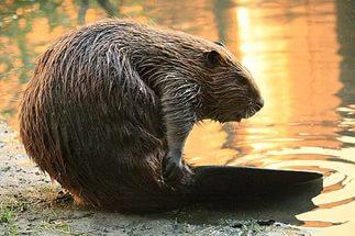 http://gx.net.ua/news_images/1484840547.jpg