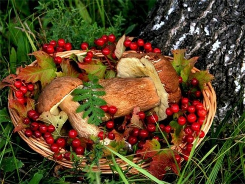 Харьковчане подсели на грибы и ягоды