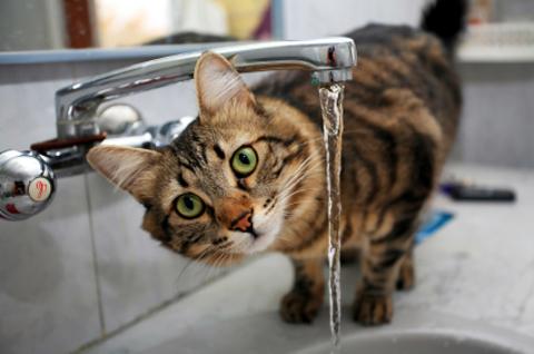 В домах харьковчан отключили воду