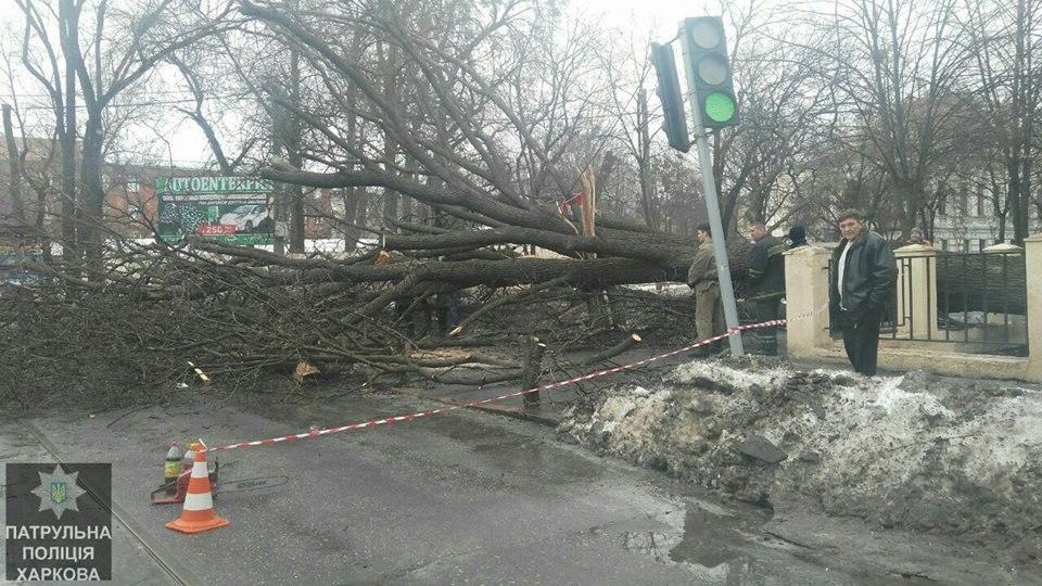 В центре Харькова рухнуло большое дерево (ФОТО)
