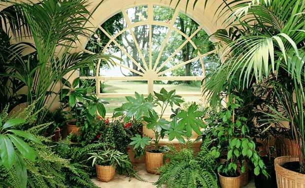 Зеленые гости поселятся в домах харьковчан