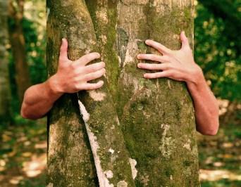 В Харькове лихач загнал пенсионера на дерево (фото)