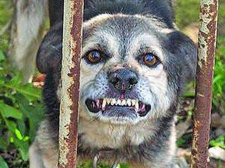 Безумное животное держит в страхе целый поселок под Харьковом