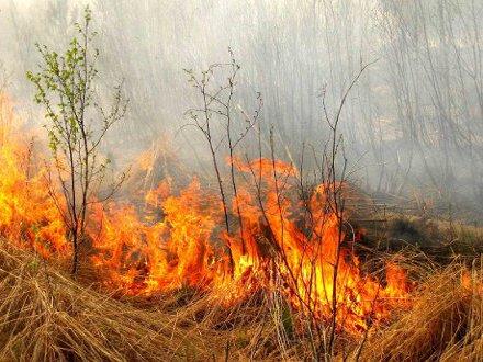Крупные пожары произошли на Харьковщине