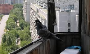 Харьковчане объявили войну неожиданным соседям