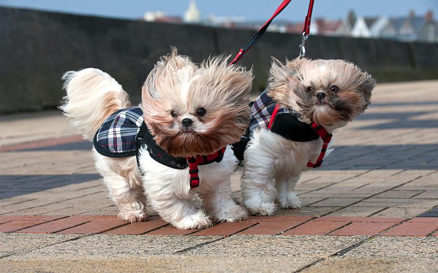 Сильный ветер обрушится на Харьков
