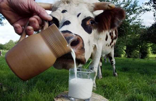 Жителей Харькова поят фальсифицированным молоком