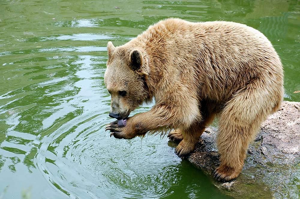 http://gx.net.ua/news_images/1496784191.jpeg