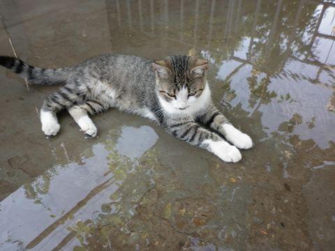 Жители сотен домов в Харькове будут сутки сидеть без воды
