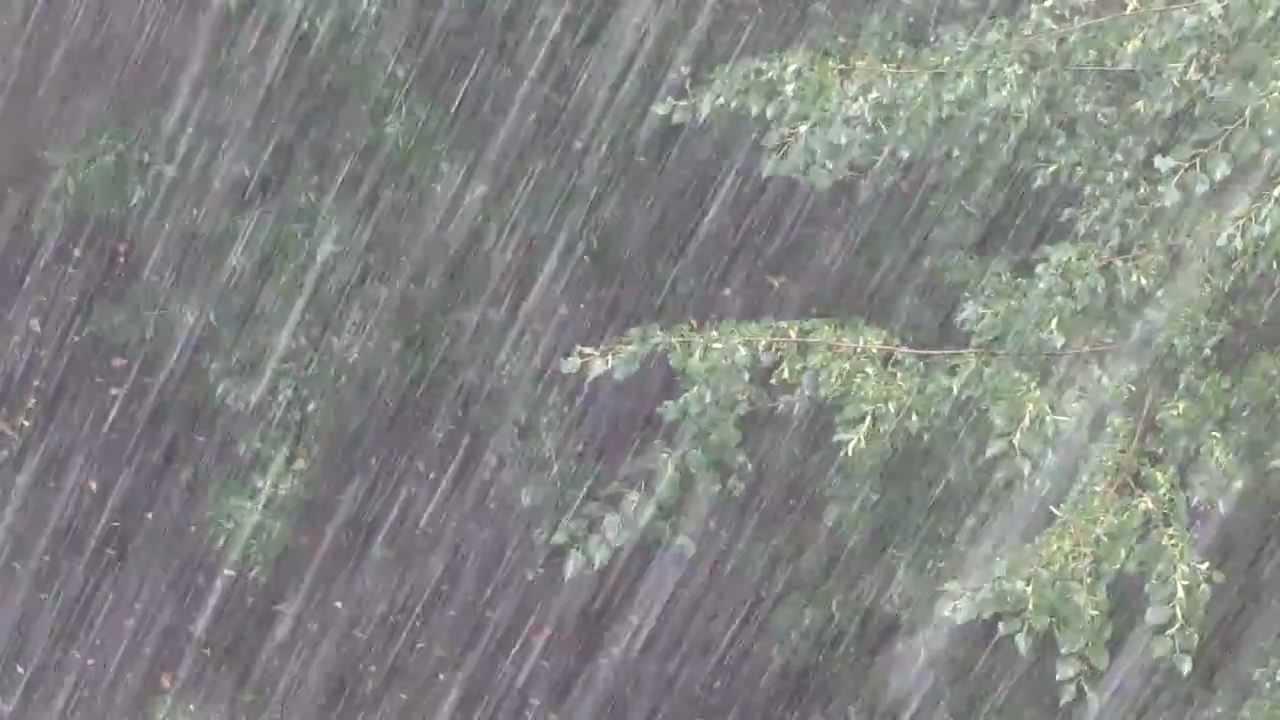 Сильный ветер и ливень накрыли город в Харьковской области (видео)