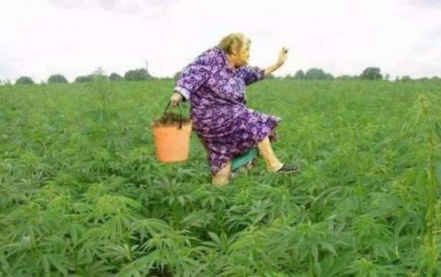 Полиция разорила огород пенсионерки (фото)