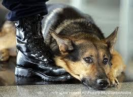 Харьковские живодеры заказали киллера для собственной собаки