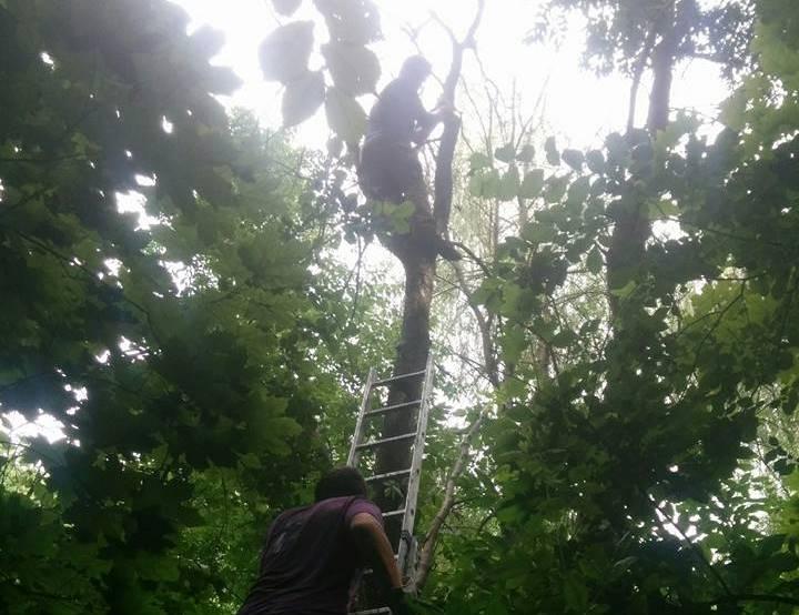 В  посадке на Алексеевке экстремального отдыхающего струсили с дерева