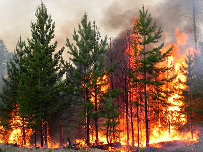 Крупный пожар на Харьковщине. С огнем борются уже более пяти часов