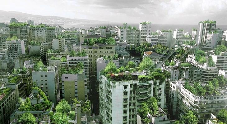 Крыши харьковских многоэтажек хотят засадить зеленью