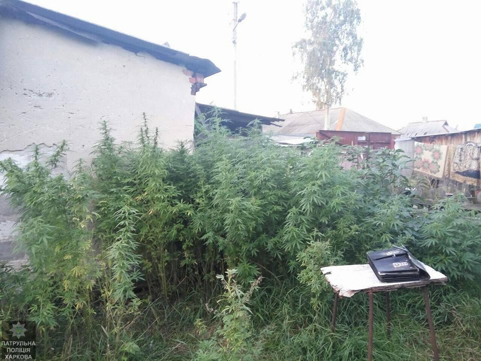 Опасное поле обнаружили на окраине Харькова (фото)