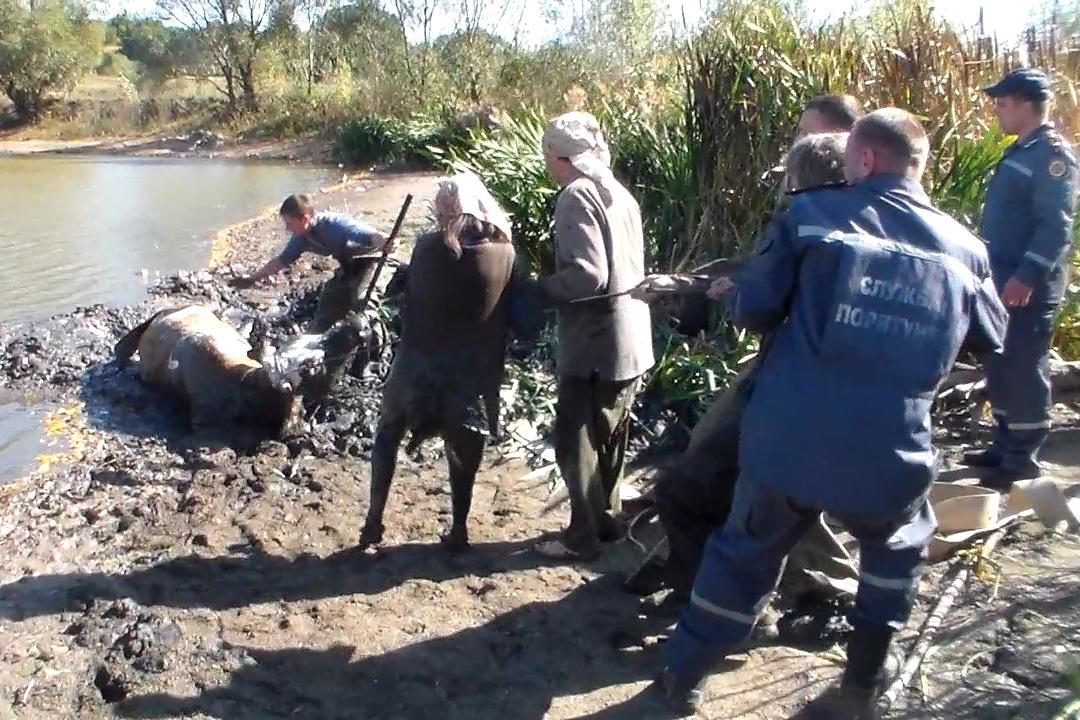 Cпецоперация на Харьковщине. Женщина попала в страшную ловушку (фото)