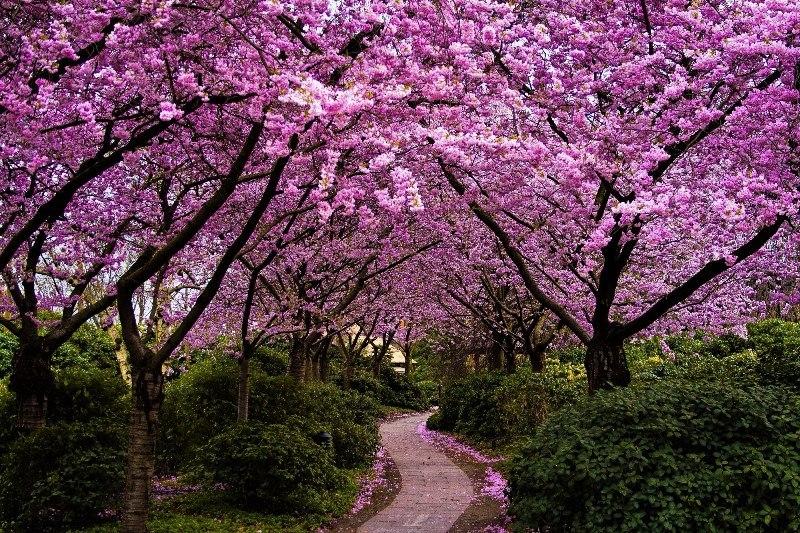 Светличная иПосол Японии посадили сакуры впарке Горького