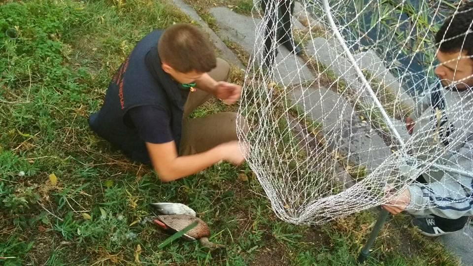 ЧП в Харькове. У реки обнаружили несколько мертвых тушек (фото)