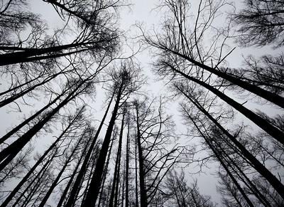 Девушка, которая пропала под Харьковом, скрывалась в лесу