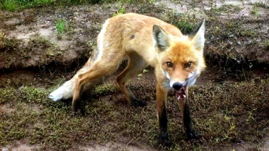 Жители Харьковщины подверглись атаке неадекватных животных