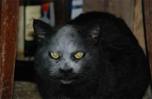Взбесившееся животное обнаружили под Харьковом