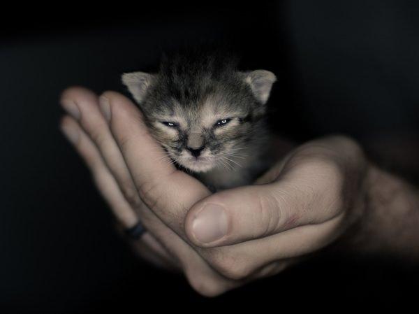 В Харькове спасли животное, которое отбилось от семьи и попало в неприятную ситуацию
