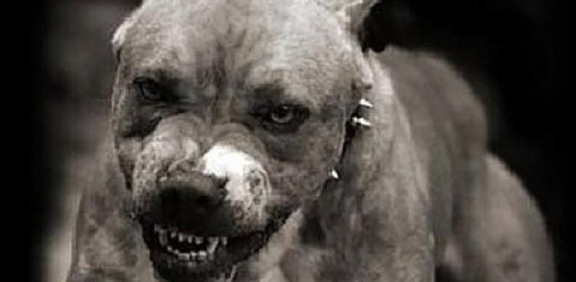Нападение собак под Харьковом. Люди выйдут на центральную площадь города