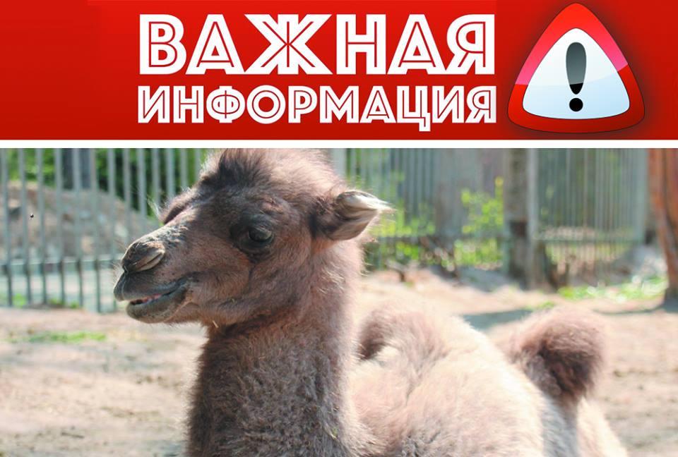 http://gx.net.ua/news_images/1528791927.jpg