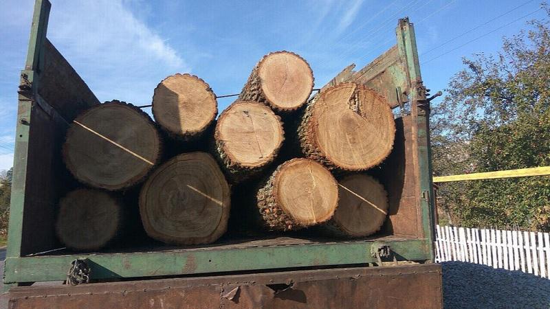 Гройсман рассказал, как вывозить лес контрабандой