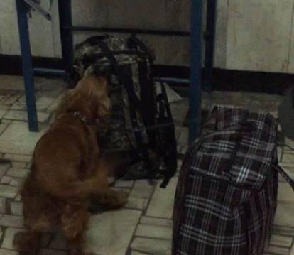 Происшествие на ЮЖД. Пассажир не вернулся домой из-за собаки