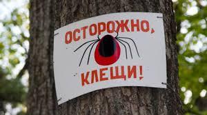 Харьковчан атакует опасная живность. Количество укушенных возросло