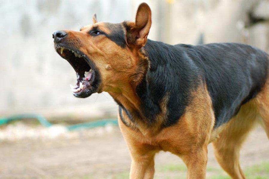 В Харькове девочка онемела после нападения собаки