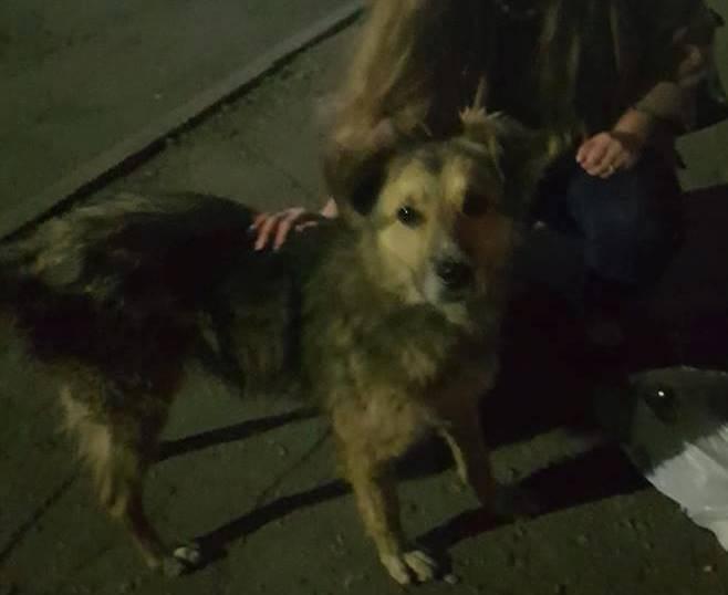 Бродячая собака спасла девушку от преступника в Харьковской области (фото)