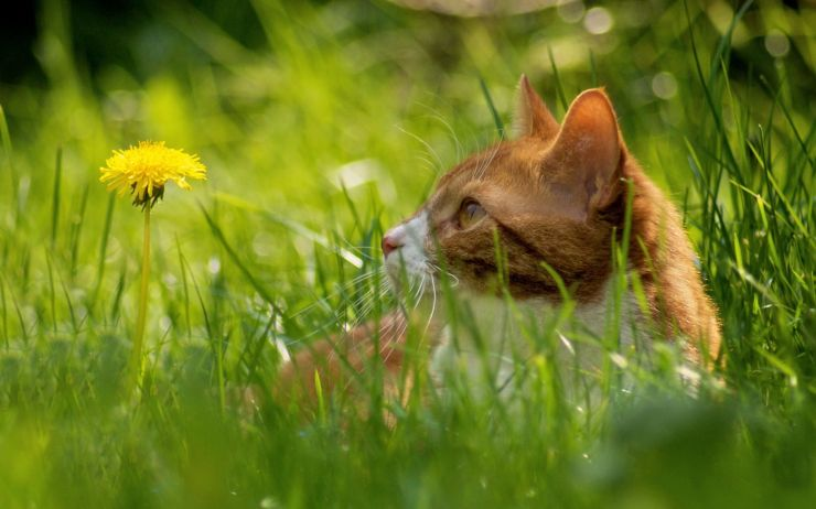 /upload/zoo/Animals___Cats_Red_Cat_in_the_grass_044665_.jpg