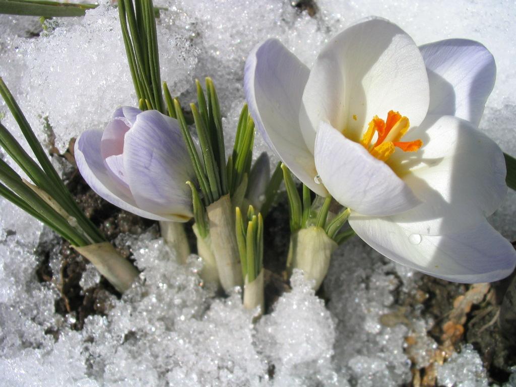 Любителей цветов заставят раскошелиться